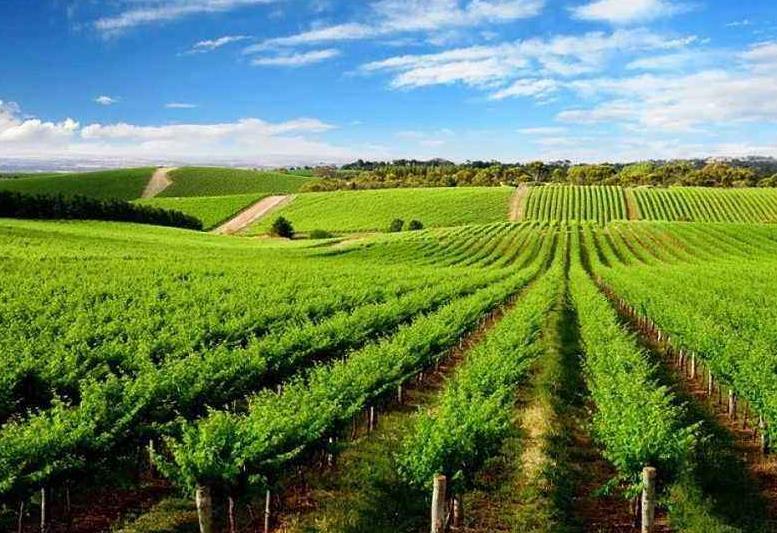 福建Betway农业发展有限公司
